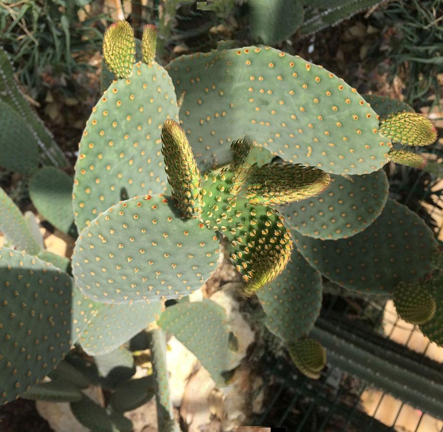 cactus, glitch, antwerpen, hortus
